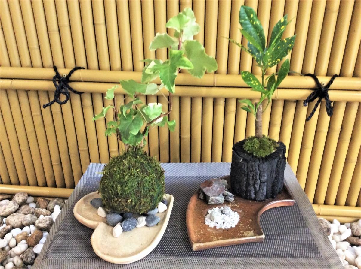 かわいい(苔玉or苔炭鉢)づくりと一緒に手びねり陶芸体験が楽しめるプランです♪