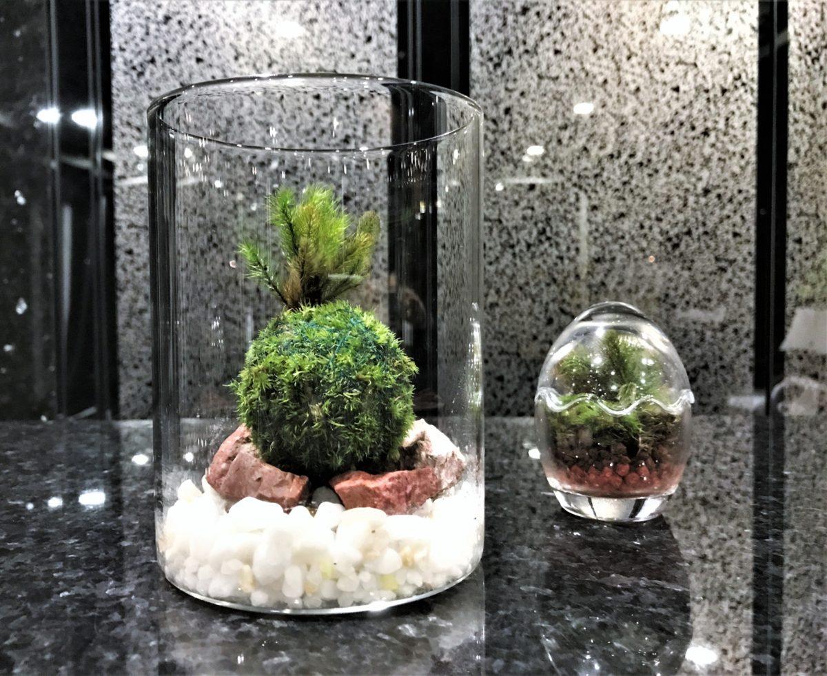 天然苔をお部屋に飾る☆お洒落(炭片・自然石で彩る)苔玉etc.