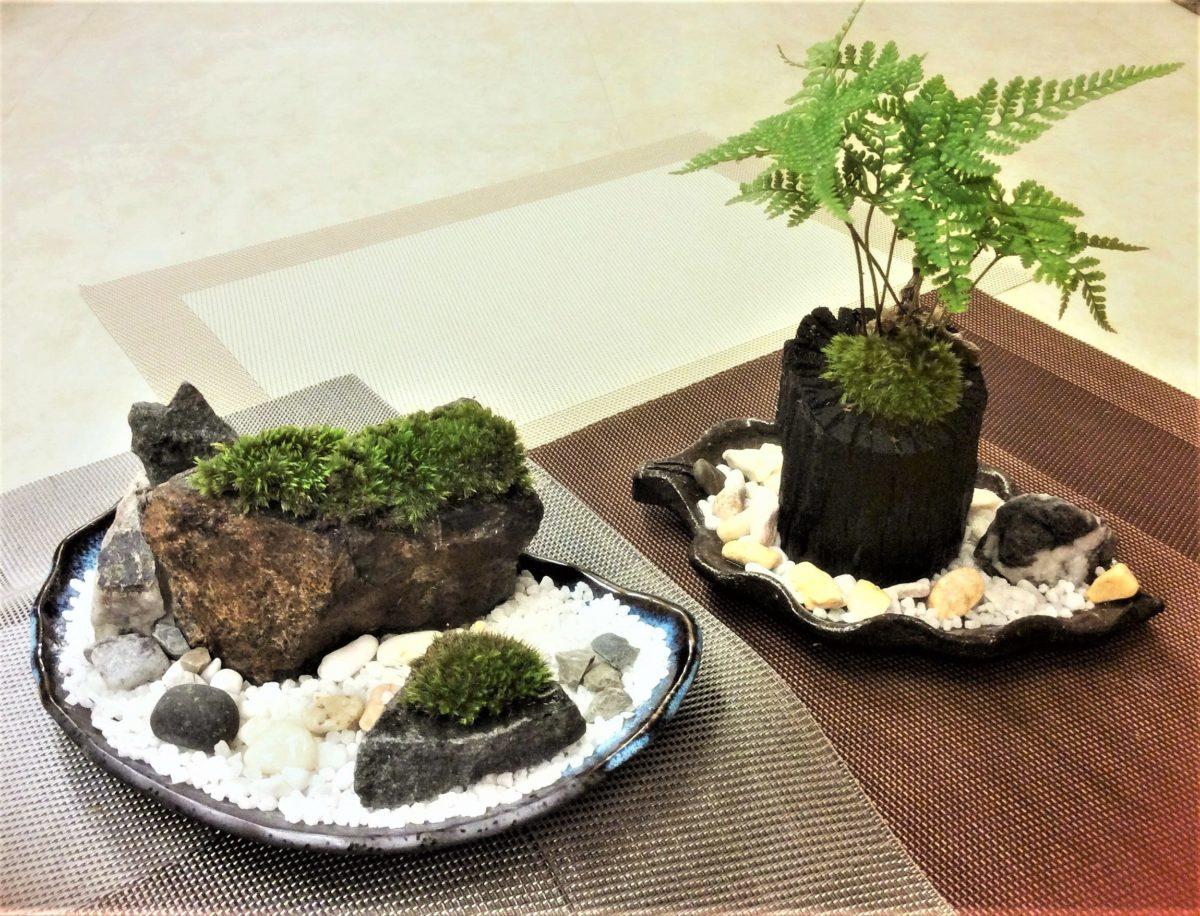 苔でお洒落なインテリア創作 ☆ 苔のいろはを学ぶ(講座)