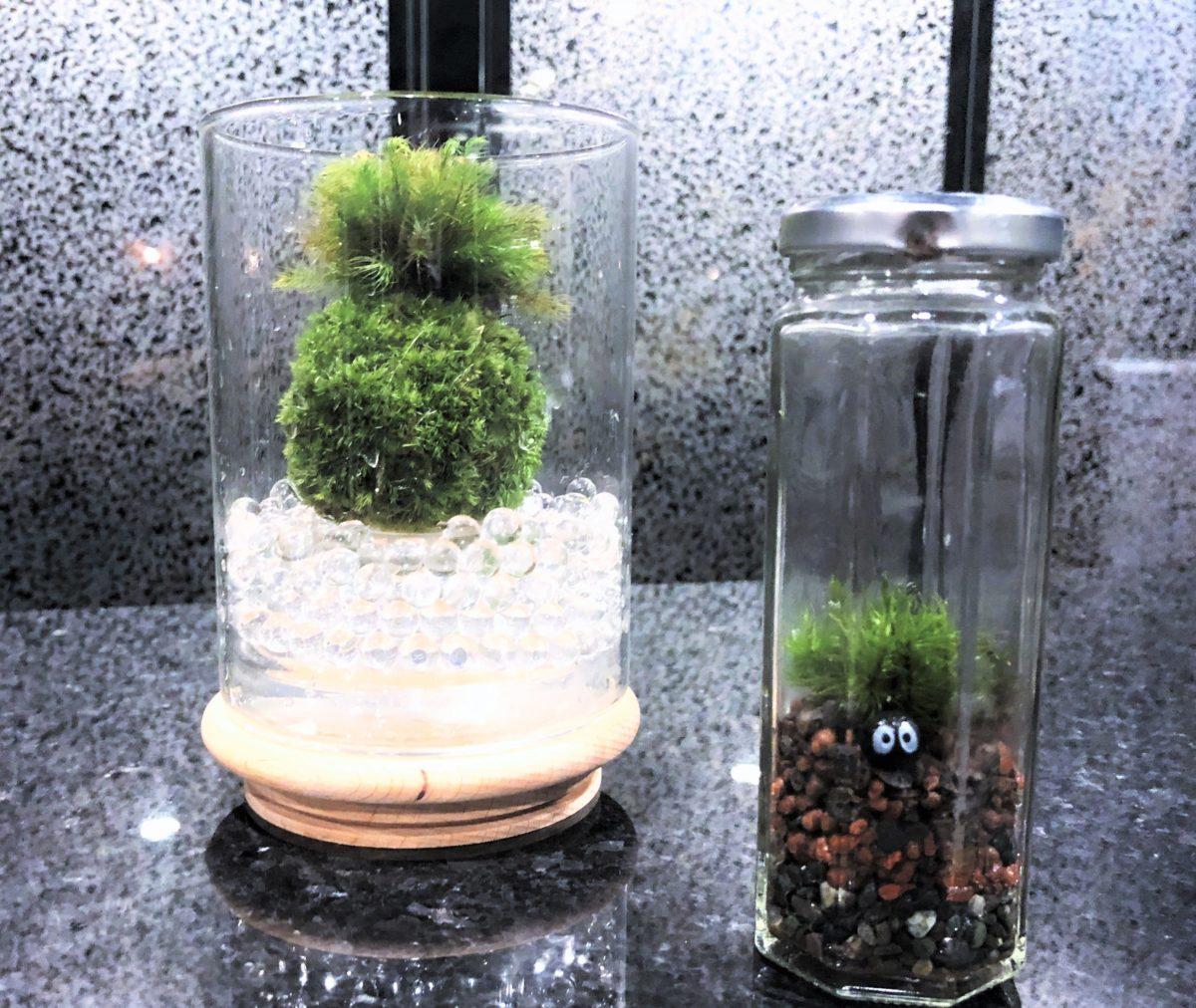 天然苔の可愛い☆グラス(苔玉)づくり   創作体験